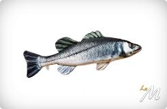 Cuscino Spigola (Sea Bass) 70cm
